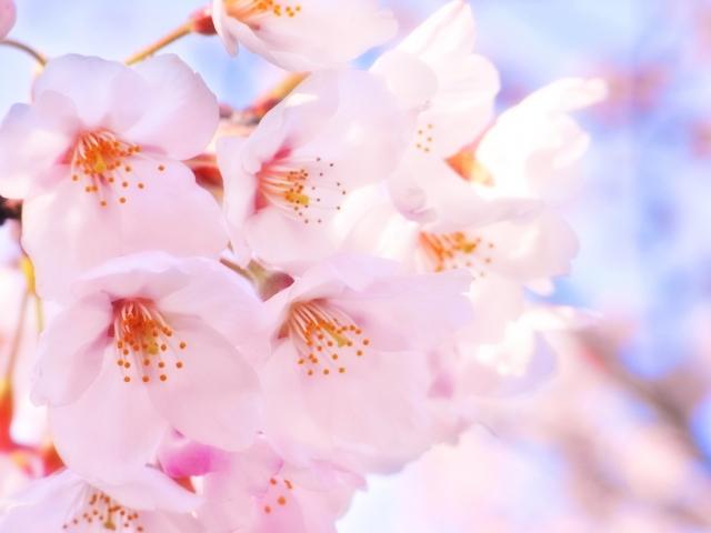 愛らしいピンクの春ドレス